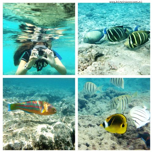 Hanauma bay collage - birgit koopsen.jpeg